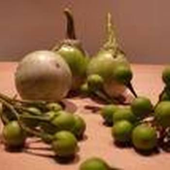 Thaise aubergine of ei-aubergine